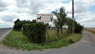 L'élevage de chiens de la horde du Bois perdu